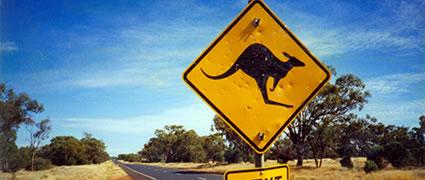 Außer einem Känguruh, das hinter einem Moped herläuft, sehe ich nicht viel.