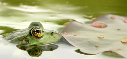 Orientierung beim Schwimmen in freiem Gewässer: Tipps und Tricks für den kürzesten Weg von A nach B
